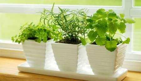 Feng shui y el amor 4 tips para mejorar tu relaci n de for Plantas para interiores feng shui